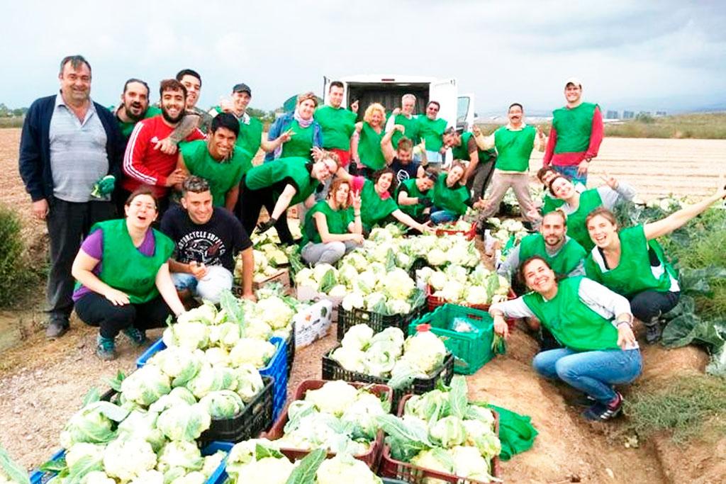 Persones de la Fundació Marianao espigolant coliflors amb Espigoladors